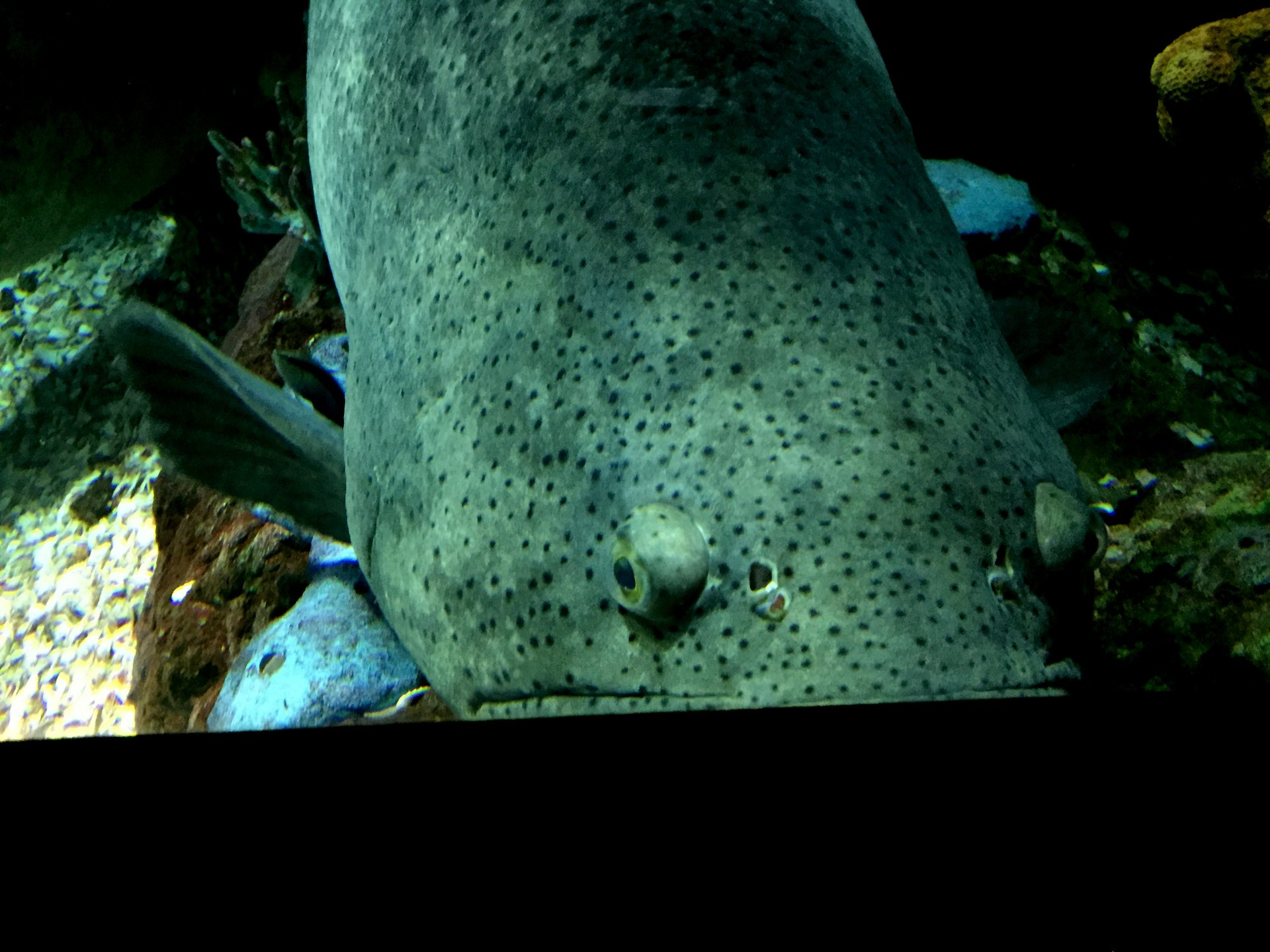 Evolution has done wild things with fish eyes