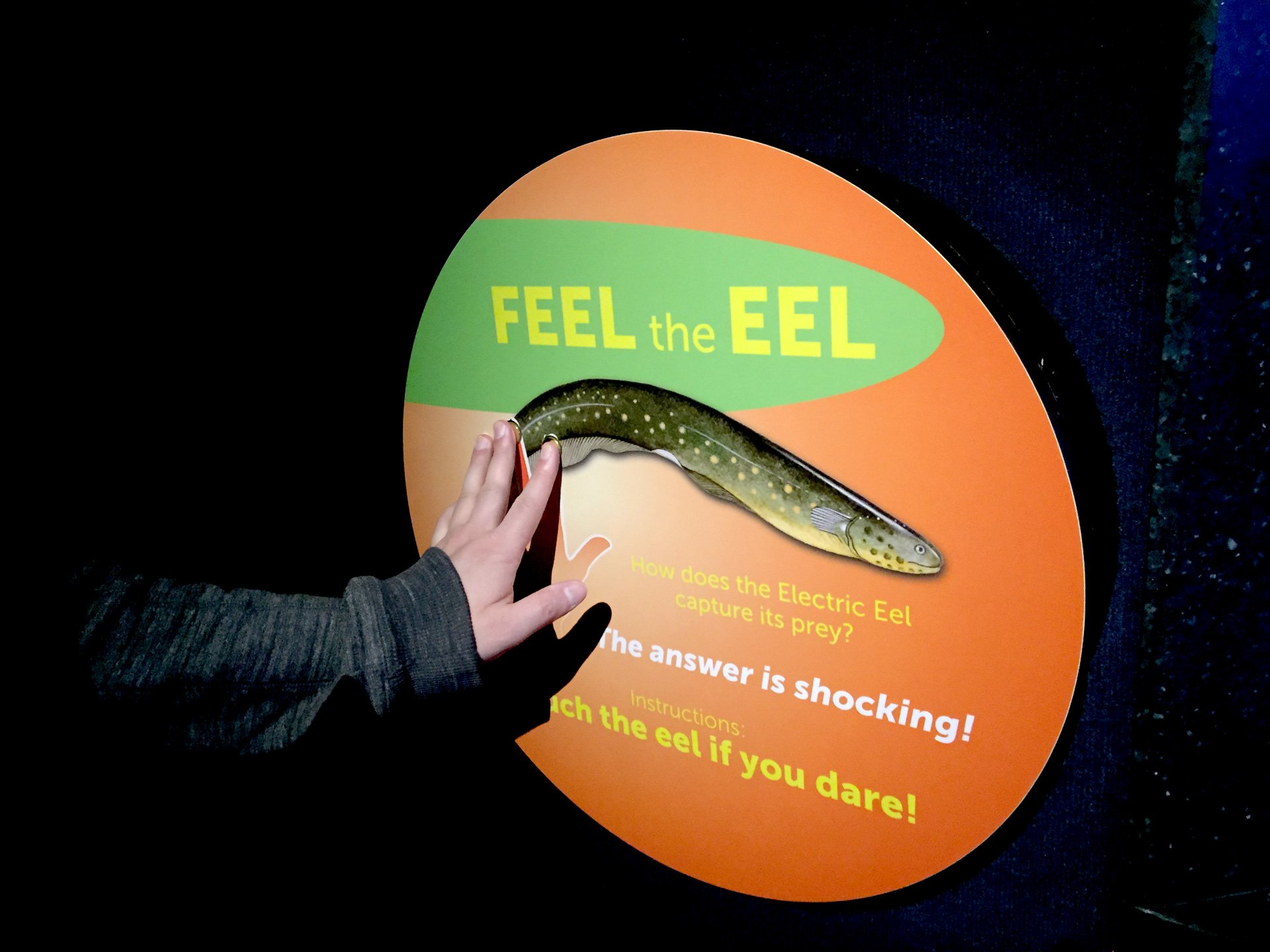 The electric eel demonstration was a crowd favorite