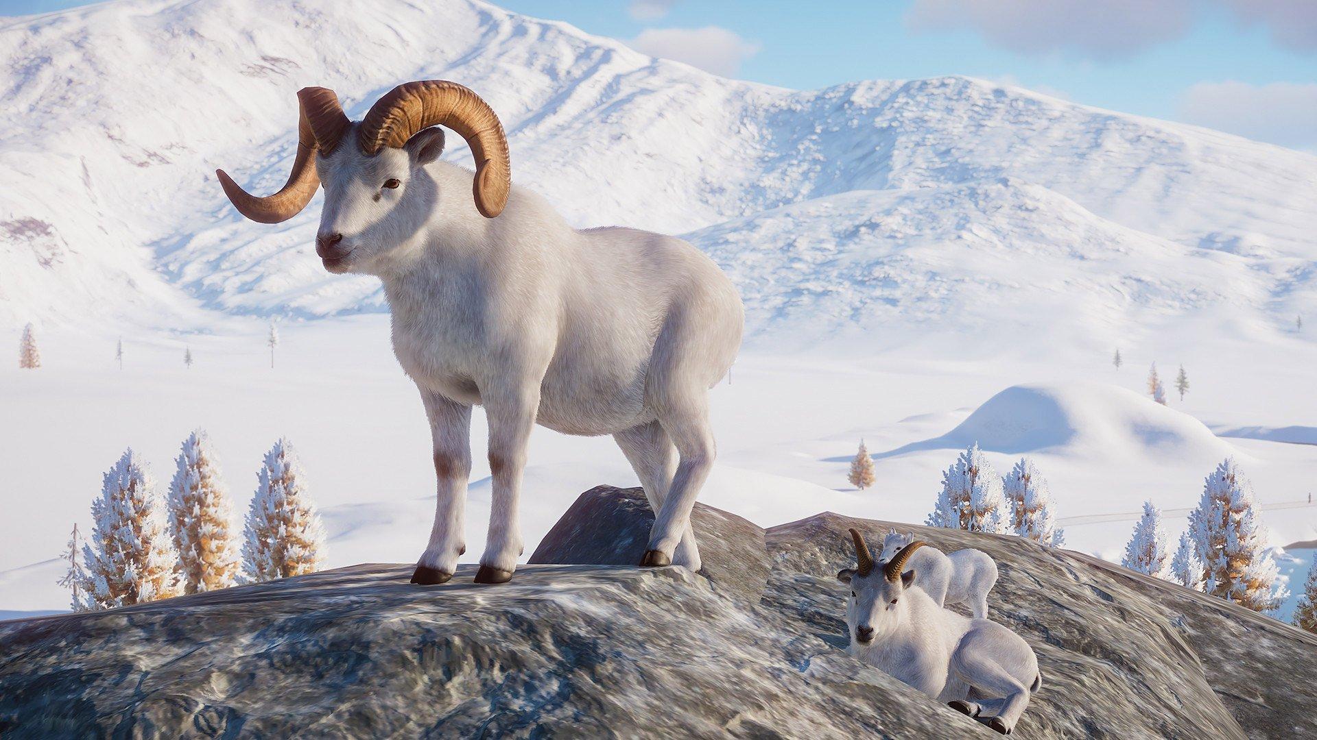Planet Zoo Dall sheep