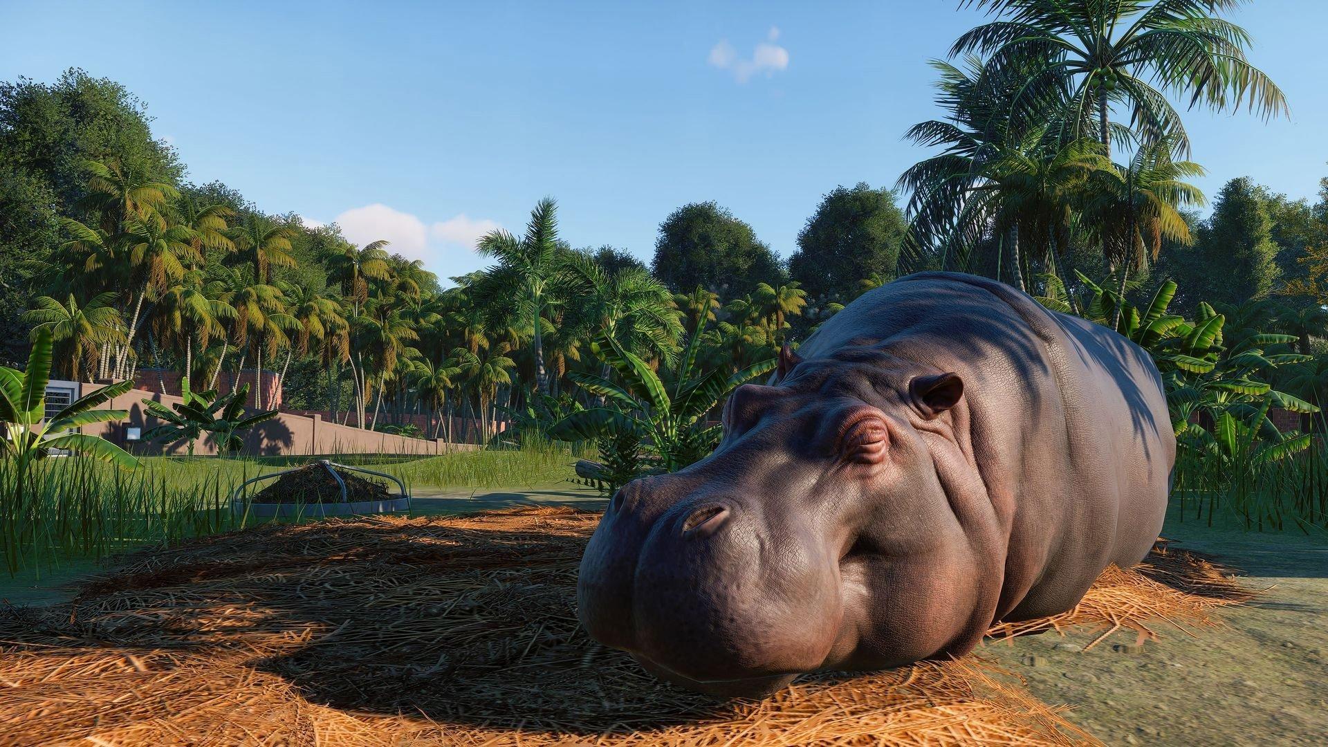 A hippopotamus in Planet Zoo